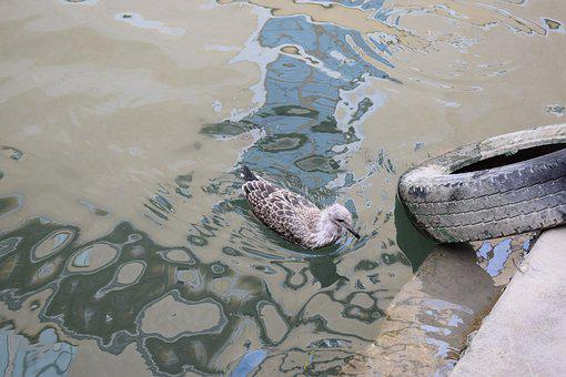 Water, Gull, Bird, Port, Water Bird, Mirroring