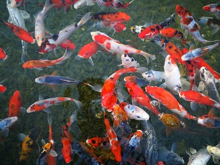 Fish, Israel Aquarium, Sea