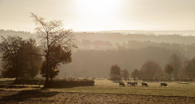 Fog, Sunrise, Cows, Pasture, Morning, Landscape, Nature