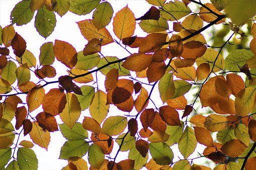 Leaves, Back Light, Autumn, Forest, Macro, Structure