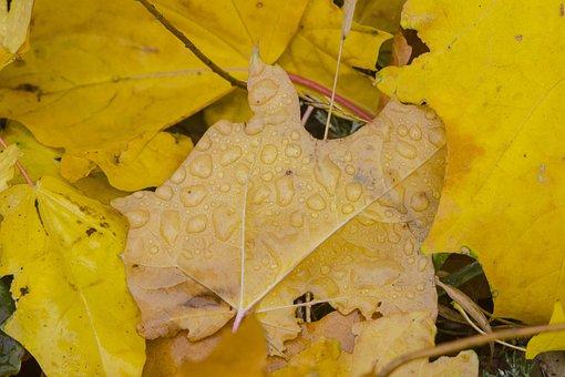 Drops, Rosa, Sheet, Leaves, Nature, Drops Of Water