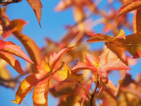Autumn, Leaves, Gold, Fall Foliage, Golden Autumn