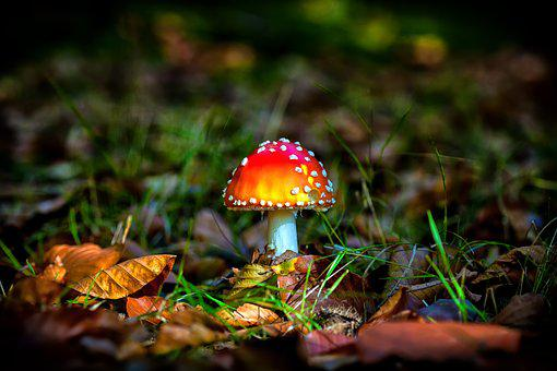 Autumn, Forest, Mushroom, Seasons, Leaves, Nature