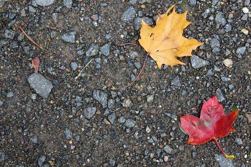 Autumn, Leaf, Leaves, Fall Foliage, Background, Stones