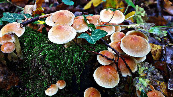 Mushrooms, Trunk, Snagit, Spróchniały Stock, Nature