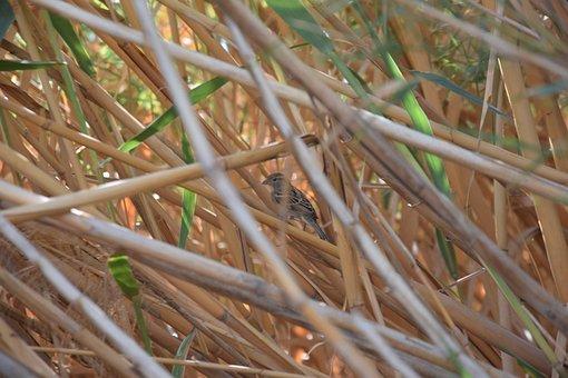 Bird, Nature, Natural, Wild, Papyrus, Oasis