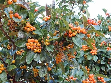 Autumn, Fruits Of Autumn, Nature, The Beauty Of Autumn