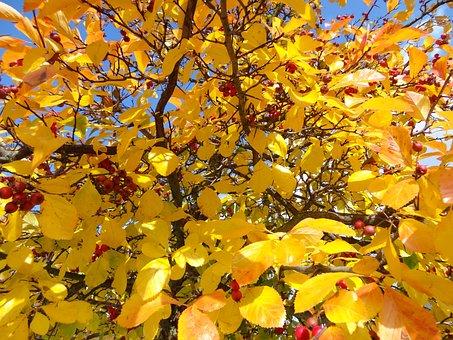 Beauty, Autumn, Nature, Landscape, The Beauty Of Autumn