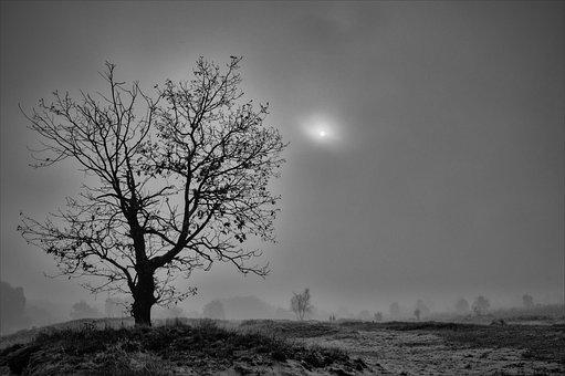 Hamburg Boberg Dunes, Silent, Fog, Loneliness, Nature