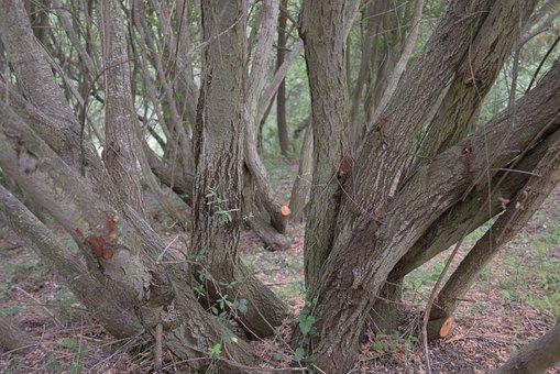 Trunk, Trees, Field, Tree, Bark, Nature, Wood, Texture