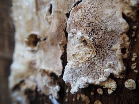 Mushroom, Wood, Weathered, Nature, Close, Background