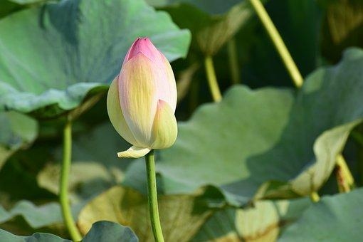 Leave, Stem, Green, Leaf, Plant, Nature, Natural, Fresh