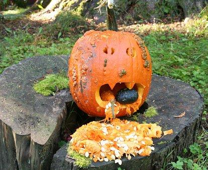 Halloween, Jack O'lantern, Pumpkin, Pumpkin Carving
