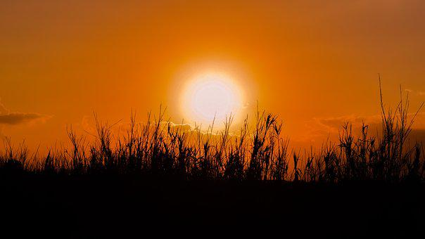 Sun, Sunset, Reeds, Nature, Silhouettes, Shadows