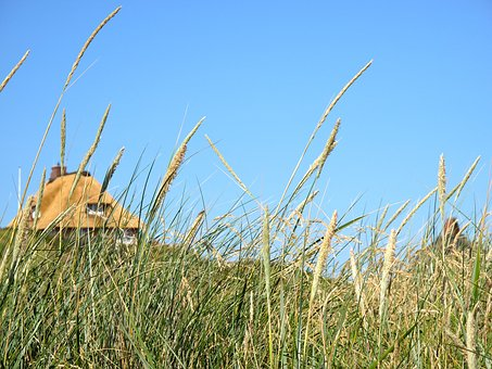 Sylt, Sun, North Sea, Summer, Island, Nature, Holiday