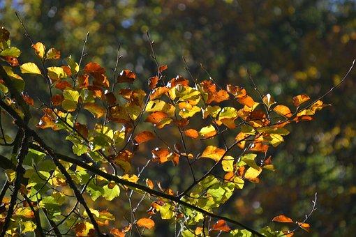 Forest, Autumn, Sun, Back Light, Leaves, Fall Foliage