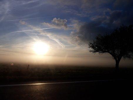 Tree, Shadow, Fog, Sun