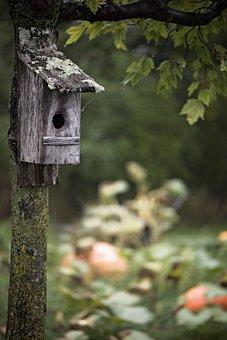 Pumpkin Patch, Bird House, Fall, Tree