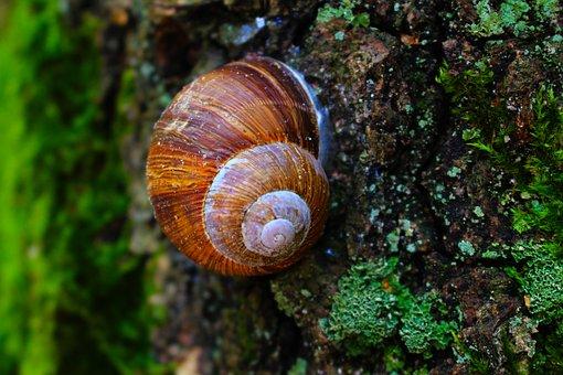 Snail, Forest, Greens, Nature, Tree, Closeup, Green