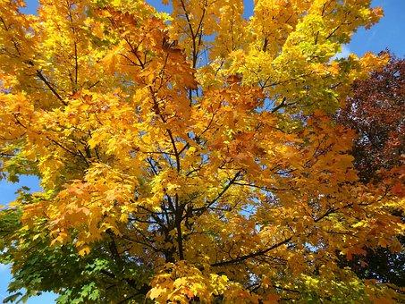 Autumn, Nostalgia, Romance, The Beauty Of Nature, Trees