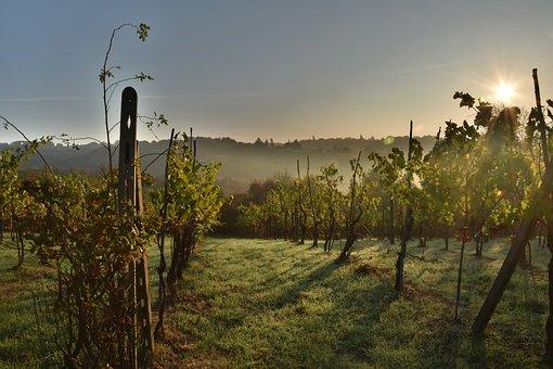 Wine, Italy, Tuscany, Grapes, Vine, Nature, Vineyards
