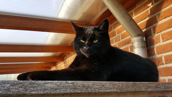 Cat, Black Cat, Mieze, Pet, Animal, Cat's Eyes, Black