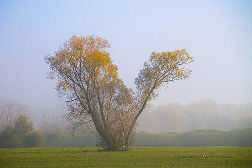 Autumn, Fog, Tree, Meadow, Rising Fog, Mood