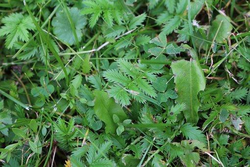 Grass, Green, Summer, Nature, Blade Of Grass, Leaf
