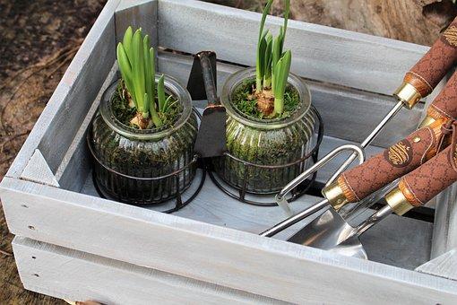 Plants, Garden, Home Garden, Arrangement, Box