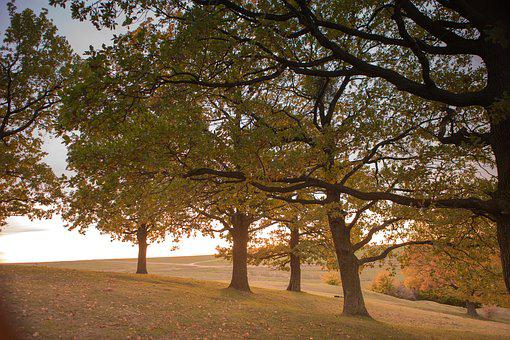 Tree, Nature, Autumn, Landscape, Branches, Leaves