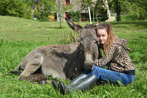 Girl, Donkey, Complicity, Hug, Tenderness, Affection