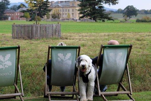 Enjoying The View, Deckchair, Dog