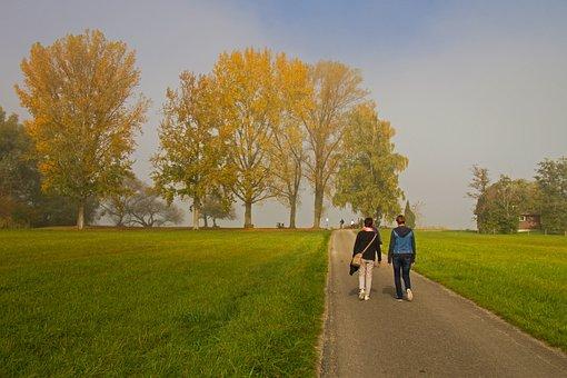 Autumn Day, Autumn Morning, Fog, Sun, Autumn, Mood