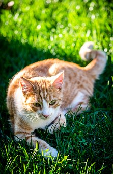 Cat, In The Doghouse, Feline, Domestic Animal