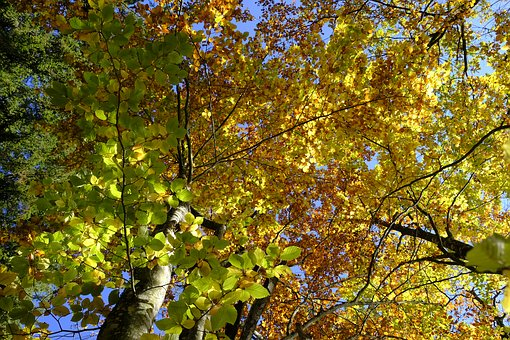 Tree, Autumn, Leaves, Fall Foliage, Golden Autumn