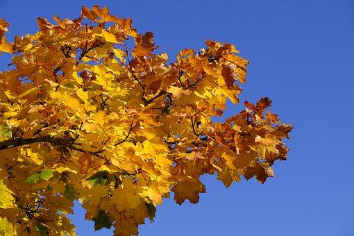 Autumn, Leaves, Fall Foliage, Golden Autumn, Nature