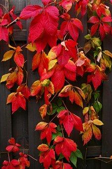 Autumn, Fall Foliage, Golden Autumn, Leaves, Colorful