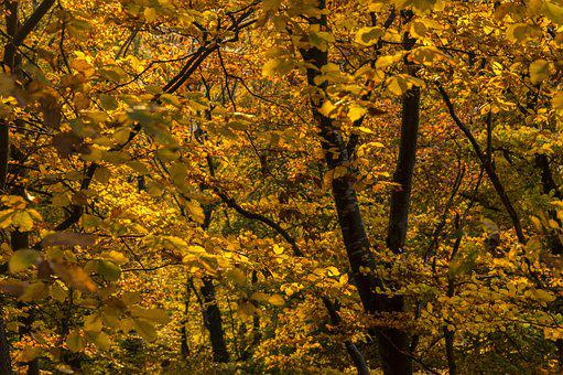 Autumn, Autumn Colours, Leaves, Nature, Golden Autumn