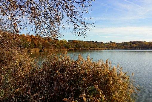 Autumn, Nature, Recreation Area, Golden Autumn