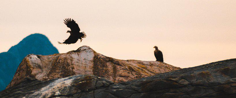 The White-tailed Eagle, Panorama, Norway, Heaven