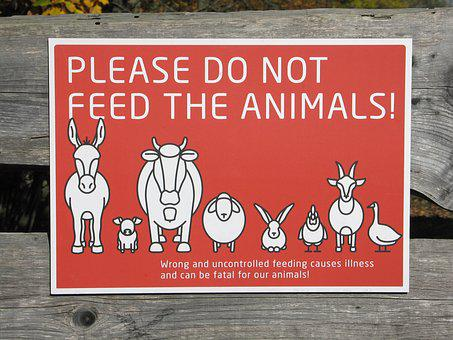 Animals, Shield, Please Do Not Feel The Animals