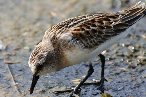 Animal, River, Waterside, Wild Birds, Little Bird