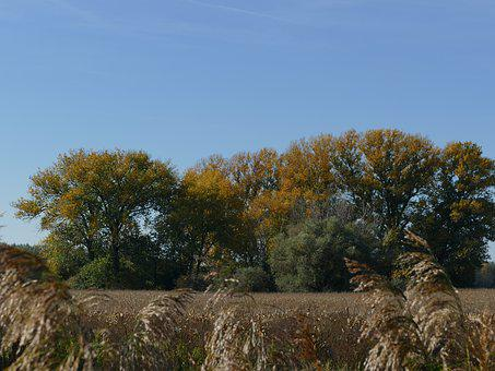 Trees, Field, Sky, Nature, Country, The Sky