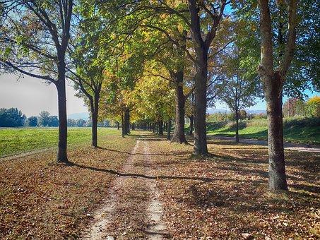 Trees, Avenue, Away, Nature, Leisure, Autumn, Trail