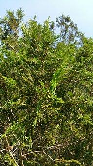 Nature, Tree, Green, Forest, Landscape, Plant, Leaf