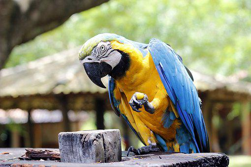 Arara, Red Macaw, Animals, Bird, Tropical Bird