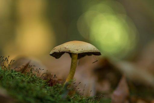 Mushroom, Autumn, Nature, Forest, Mushrooms