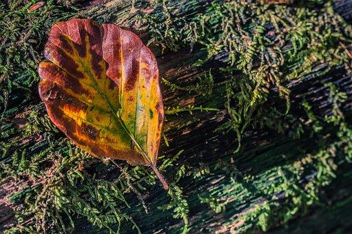 Sheet, Autumn, Structure, Nature, Yellow, Netherlands