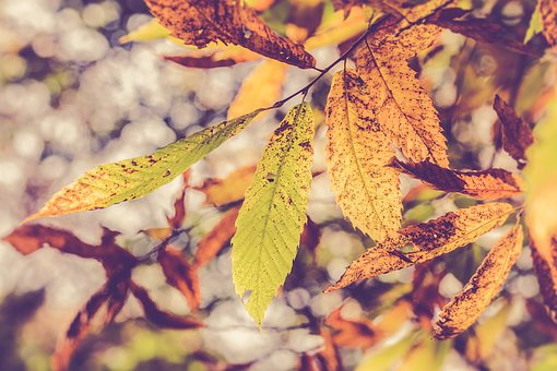 Leaves, Autumn, Fall Colors, Season, Forest, Colors
