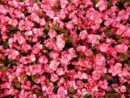 Flowers, Carpet, Flower Carpet, Handsomely, Summer